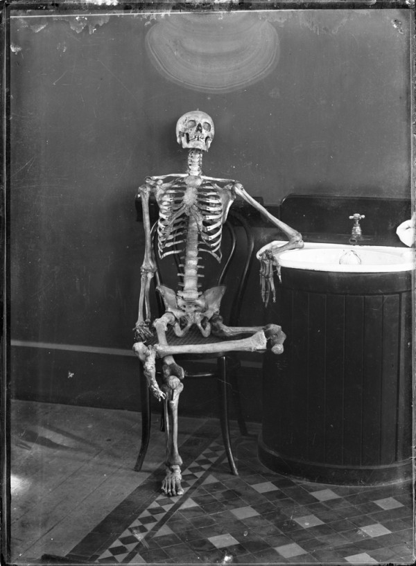 Portrait of an articulated skeleton on a Thonet bentwood chair
