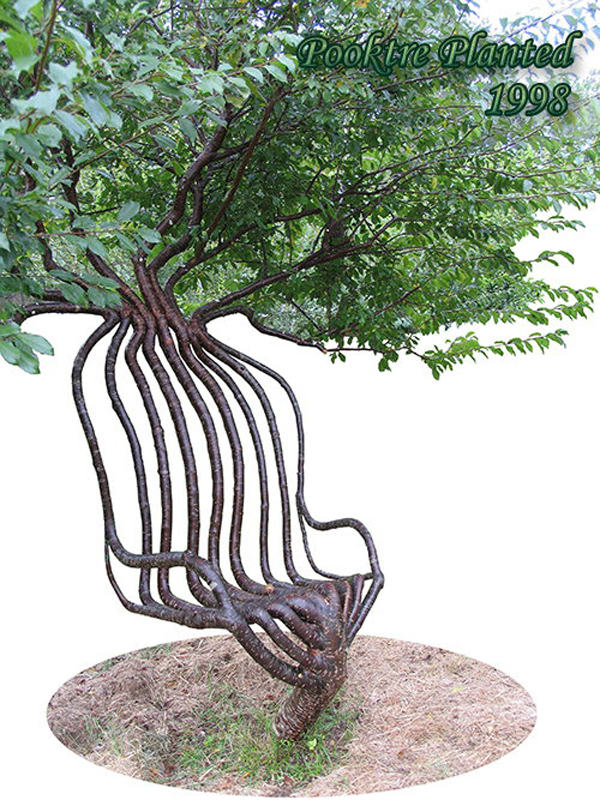 Tree Grown Chair by Peter Cook